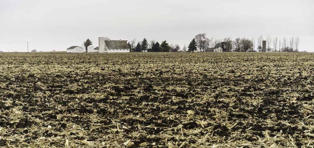 Cornfield in November.jpeg